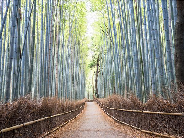 arashiyama-bamboo-forest-in-kyoto,-japan