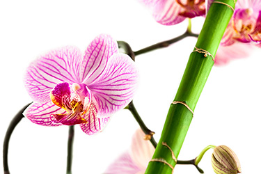 orchid-and-bamboo